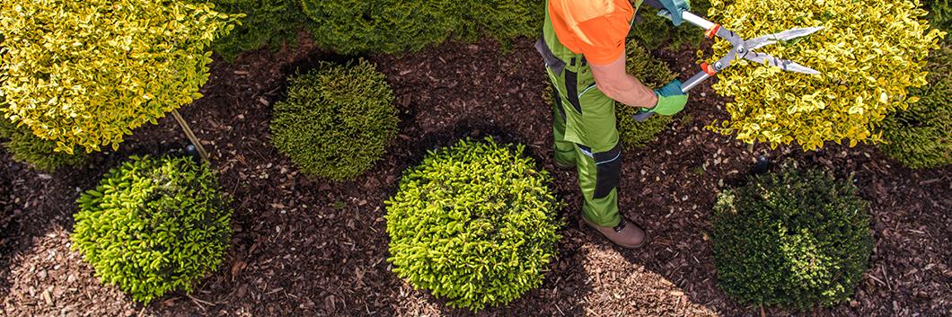 Tree Service Insurance Massachusetts